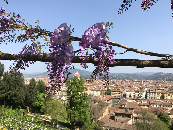 Italian Spring: in search of wisteria from Naples to Milan and from Capri to Como